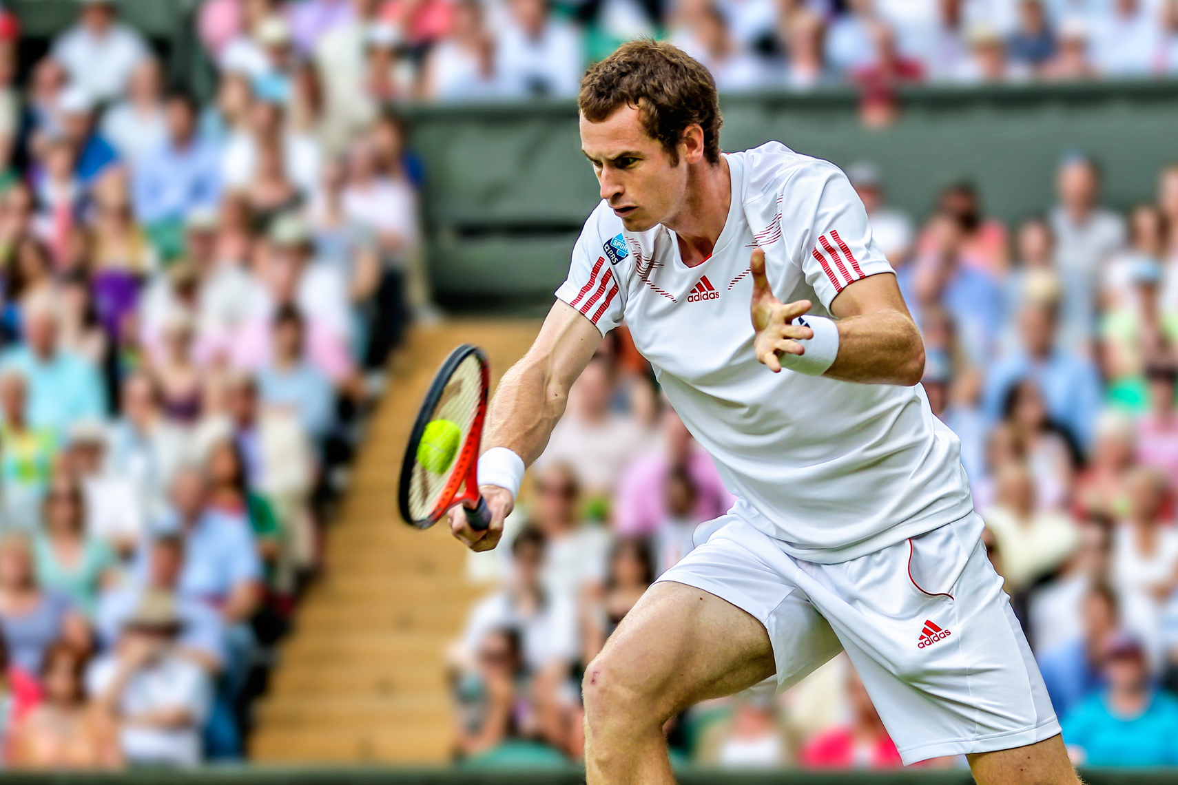 Andy Murray | Wimbledon
